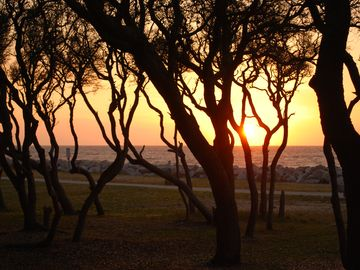 Sunrise at Fort Fisher. Civil War historic site 0.5 miles south. Cool trees!