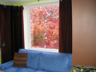 Columbia Heights apartment photo - Fall Oak tree outside your window - like being in a tree house!