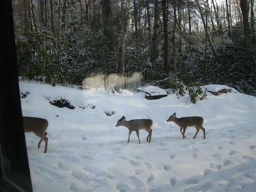 Mountain Lodge Realty Beech Mountain Lodge Deer in Driveway