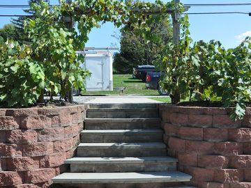 Back steps to street with grape vine arch