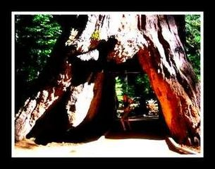 Twain Harte cabin photo - Big Tree Park and Yosemite is just 60 min. to entrance from Cabin