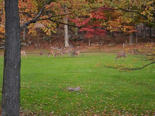 Lake Wallenpaupack property rental photo - Golf course with some guests on it