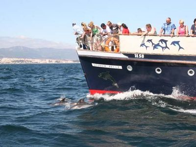 Dolphin Watching from Gibraltar