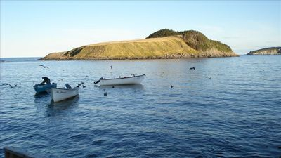 Fisherman off Fox Island, Tors Cove