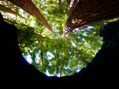 Big Sur cabin rental - Ancient Redwoods: the silent temples in Heart Circle's Forest. (Waterfall Trail)