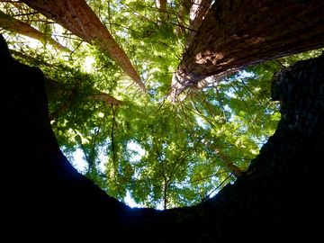 Ancient Redwoods: the silent temples in Heart Circle's Forest. (Waterfall Trail)