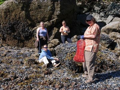 gathering local pacific blue mussels