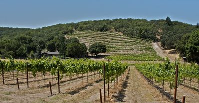 Set on a private vineyard on 7+ acres in the eastern hills above Sonoma.