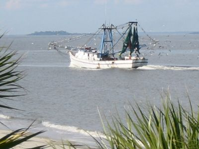 Watch shrimp boats and dolphin right off the beach!