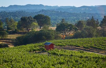 Atascadero estate rental - Vineyard and pump house, views from the main residence.
