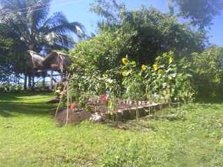 Bacalar house photo - A new garden of flowers in the backyard of Casa Mull Ha.
