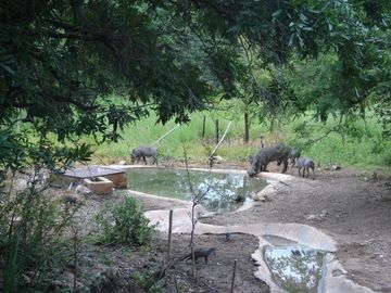 Private water hole for animals