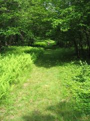 Livingston Manor cottage photo - The path to lake