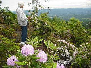 Lookout Mountain cabin photo - Hiking through Spring flowers