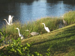 Bonita Springs estate photo - Local wildlife