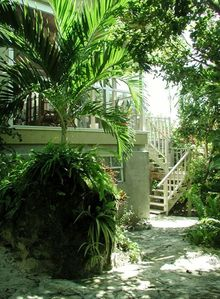 Driftaway side garden with lush foliage - showing 2nd entrance to back deck