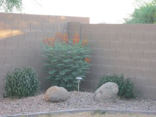 San Tan Valley bungalow photo - other corner of backyard