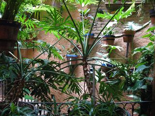 Guanajuato house photo - Plants on Peristyle