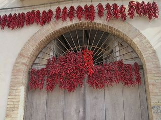 Avellino house photo - A Local Specialty - Hot Calitrian Chili Peppers Drying in the Sun