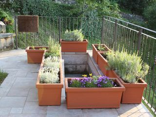 Lezzeno apartment photo - Lavender and flowering plants keep the herb garden company at the terrace's edge
