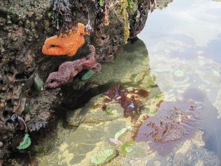 Lincoln City cottage photo - Colorful Tidepools