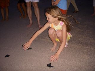 Punta Mita condo photo - Naming and releasing baby sea turtles is a magical experience...