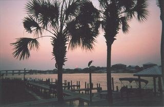 Orange Beach condo photo - Spectacular sunset from patio