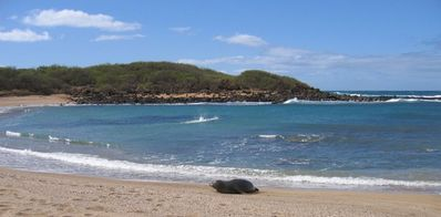 The cherished Hawaiian monk seals frequently visit our beach