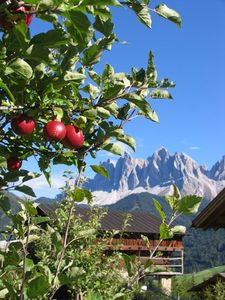 Lush apples and a view of the Geisler