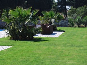 Pool surrounded by lawn area