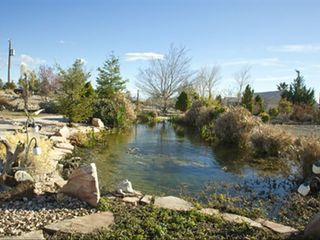 Pahrump villa photo - Backyard