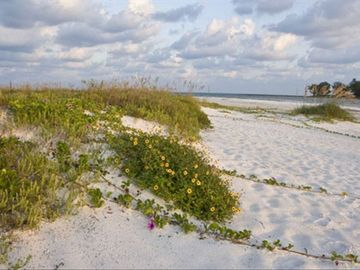 Longboat Key cottage rental - The beach near Longboat Pass. A fifteen minute walk from the Cottage