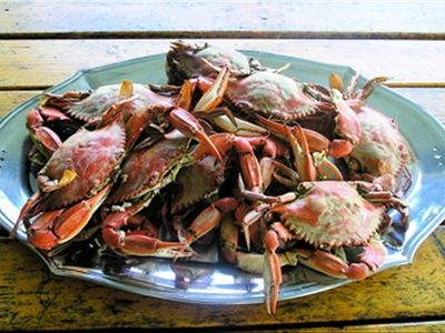 Enjoy fresh caught Crab Feast - PonyIsland House supplies the crab traps for you