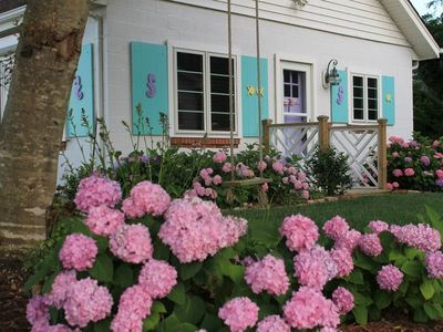 Williamsburg cottage rental - Summer time hydranges in bloom.