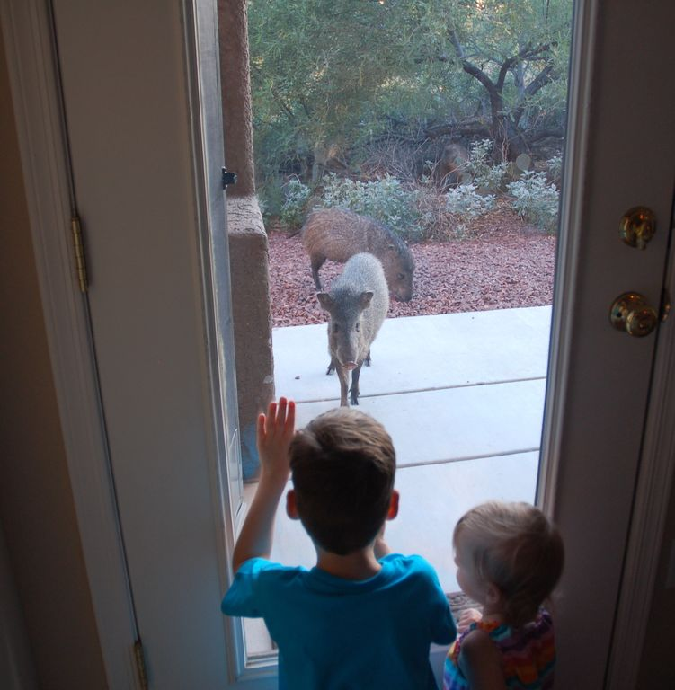 two of our small guests look at two of our four legged guests