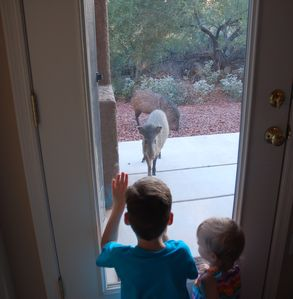 Oro Valley condo rental - two of our small guests look at two of our four legged guests