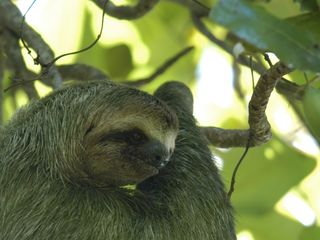 Sloth Visitor on the Property - Manuel Antonio villa vacation rental photo