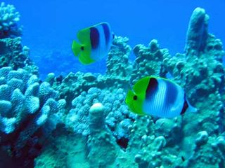 Bora Bora house photo - Swim and snorkel with beautiful tropical fish right outside your lanai!