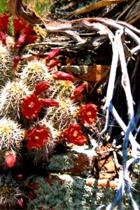 Sedona house rental - Desert in bloom near our home