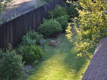 Even the local wildlife find this place inviting! Cute Doe just below balcony.