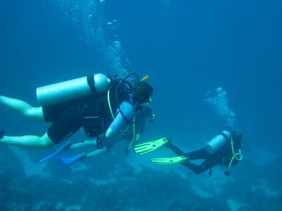 Bonaire villa rental - Diving!!