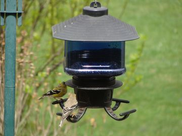 One of the many bird feeders which attract beautiful birds