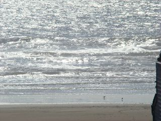 Waldport house photo - Shorebirds on a nearly private beach just 100 yards from the house.
