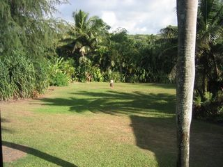 Anini Beach house photo - Large yard