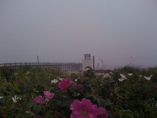 Milford house photo - Beach roses bloom at Walnut Beach Pier