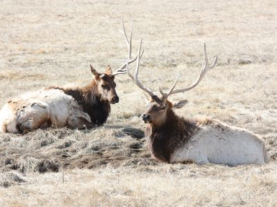 Don't miss the National Elk Refuge; just 15 miles from our condo!