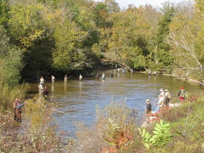 Fishing for Salmon on the Betsie River