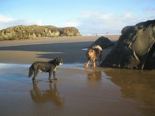 Bandon house photo - Even Our Special Guests Enjoy the Beach