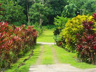 Samoa Islands house photo - Colours, divesity of the garden driveway. You can't experience this at a hotel.