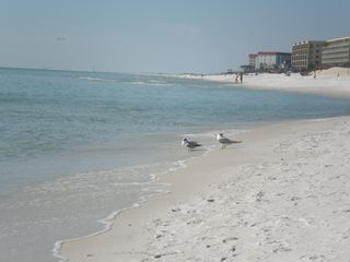 Okaloosa Island condo photo - Just you and the seagulls, no crowds!
